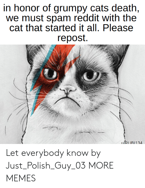polish: in honor of grumpy cats death,  we must spam reddit with the  cat that started it all. Please  repost.  LIRUR1134 Let everybody know by Just_Polish_Guy_03 MORE MEMES