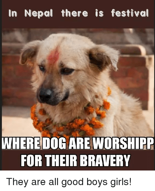 Nepal: In Nepal there is festival  WHERE DOG ARE WORSHIPP  FOR THEIR BRAVERY They are all good boys  girls!