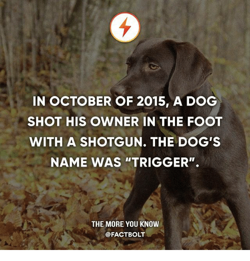 """Triggere: IN OCTOBER OF 2015, A DOG  SHOT HIS OWNER IN THE FOOT  WITH A SHOTGUN. THE DOG'S  NAME WAS """"TRIGGER"""".  THE MORE YOU KNOW  @FACTBOLT"""