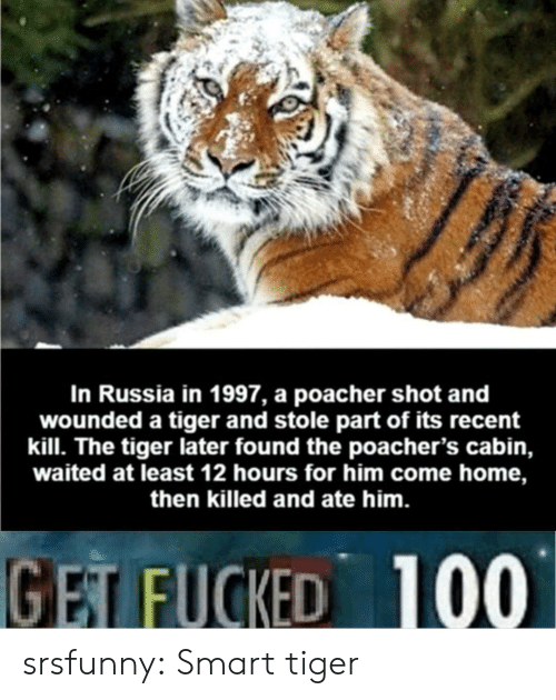 Tumblr, Blog, and Home: In Russia in 1997, a poacher shot and  wounded a tiger and stole part of its recent  kill. The tiger later found the poacher's cabin,  waited at least 12 hours for him come home,  then killed and ate him.  GET FUCKED 100 srsfunny:  Smart tiger