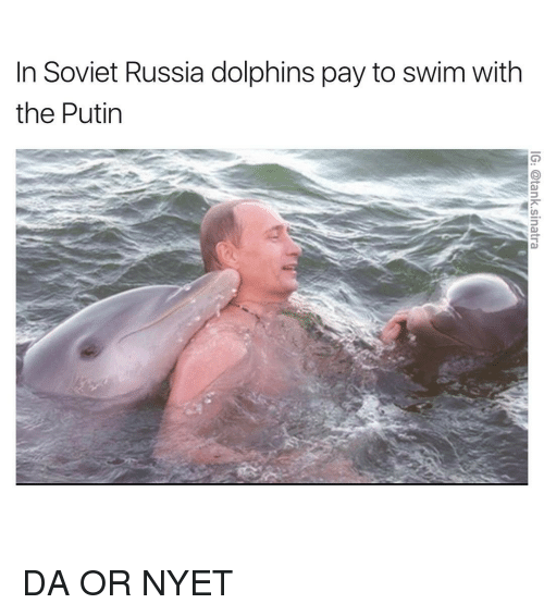 in soviet russia: In Soviet Russia dolphins pay to swim with  the Putin DA OR NYET