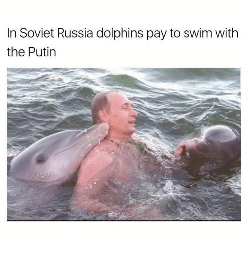 in soviet russia: In Soviet Russia dolphins pay to swim With  the Putin