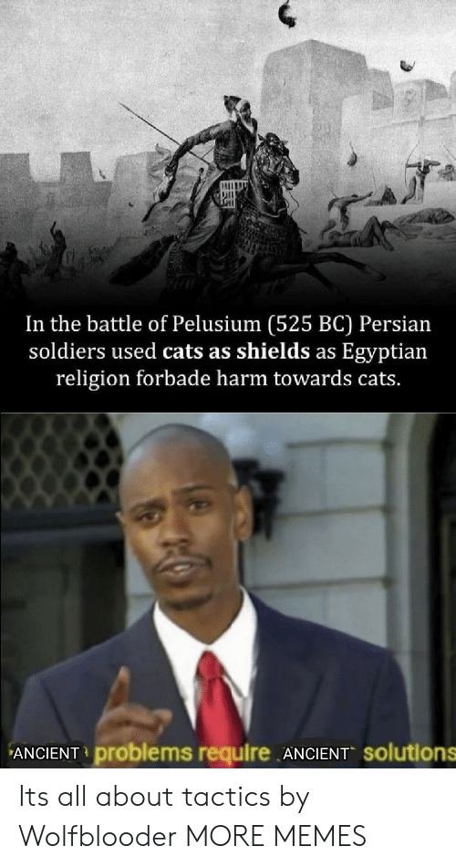 Persian: In the battle of Pelusium (525 BC) Persian  soldiers used cats as shields as Egyptian  religion forbade harm towards cats.  ANCIENT problems require ANCIENT solutions Its all about tactics by Wolfblooder MORE MEMES