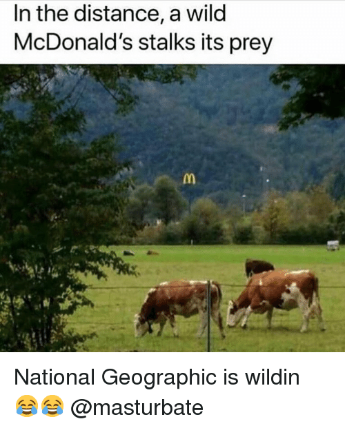 McDonalds, Memes, and National Geographic: In the distance, a wild  McDonald's stalks its prey National Geographic is wildin 😂😂 @masturbate
