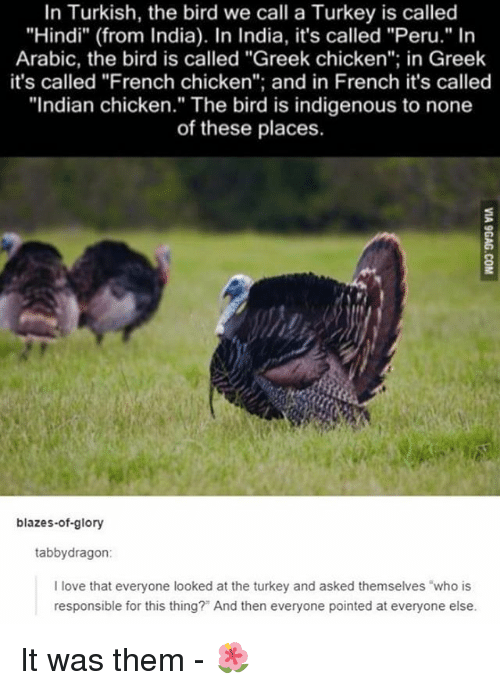 "Love, Memes, and Chicken: In Turkish, the bird we call a Turkey is called  ""Hindi"" (from India). In India, it's called ""Peru."" In  Arabic, the bird is called ""Greek chicken""; in Greek  it's called ""French chicken""; and in French it's called  ""Indian chicken."" The bird is indigenous to none  of these places.  blazes-of-glory  tabbydragon  I love that everyone looked at the turkey and asked themselves ""who is  responsible for this thing?"" And then everyone pointed at everyone else. It was them - 🌺"