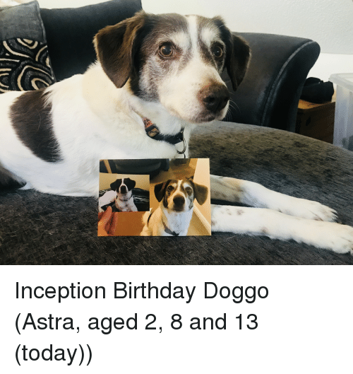 Inception: Inception Birthday Doggo (Astra, aged 2, 8 and 13 (today))
