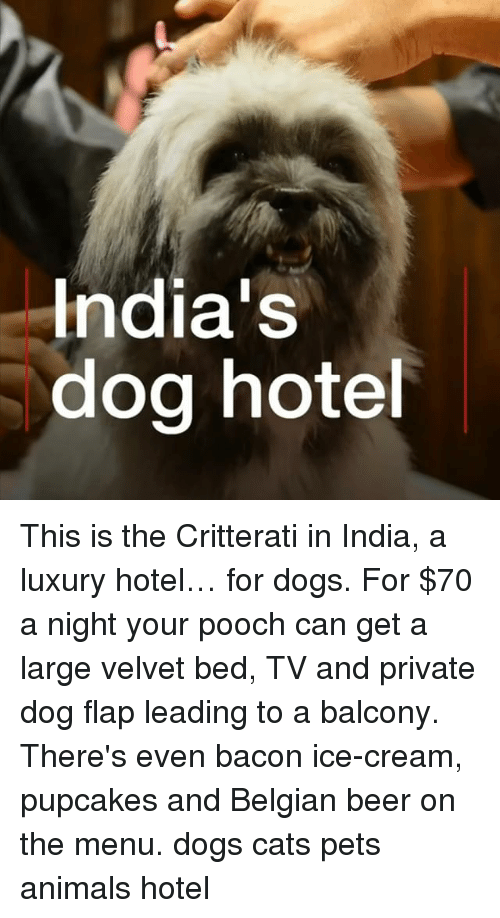 Belgian: India's  dog hote This is the Critterati in India, a luxury hotel… for dogs. For $70 a night your pooch can get a large velvet bed, TV and private dog flap leading to a balcony. There's even bacon ice-cream, pupcakes and Belgian beer on the menu. dogs cats pets animals hotel