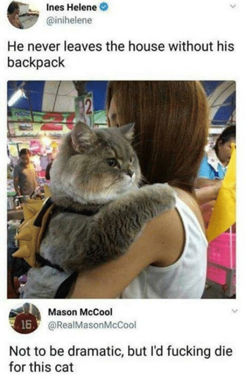 Dank, Fucking, and House: Ines Helene  @inihelene  He never leaves the house without his  backpack  Mason McCool  @RealMasonMcCool  16  Not to be dramatic, but l'd fucking die  for this cat