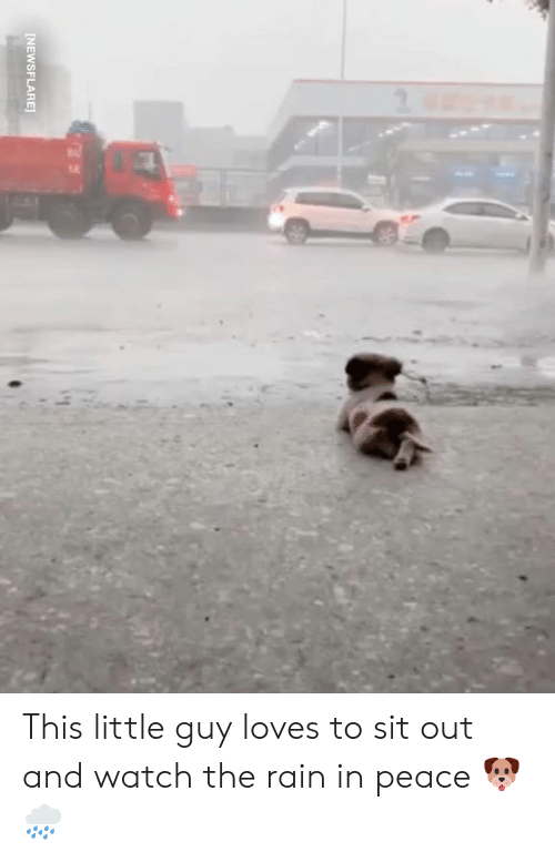 Dank, Rain, and Watch: INEWSFLARE This little guy loves to sit out and watch the rain in peace 🐶🌧️