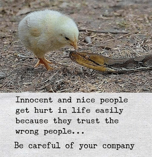 Life, Nice, and Be Careful: Innocent and nice people  get hurt in life easily  because they trust the  wrong people...  Be careful of your company