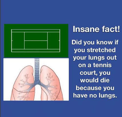 Tennis: Insane fact!  Did you know if  you stretched  your lungs out  on a tennis  court, you  would die  because you  have no lungs.