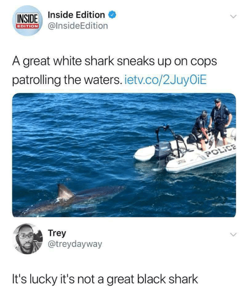 Police, Shark, and Black: INSIDE Inside Edition  EDITION@insideEdition  A great white shark sneaks up on cops  patrolling the waters. ietv.co/2JuyOiE  POLİCE  Trey  @treydayway  It's lucky it's not a great black shark