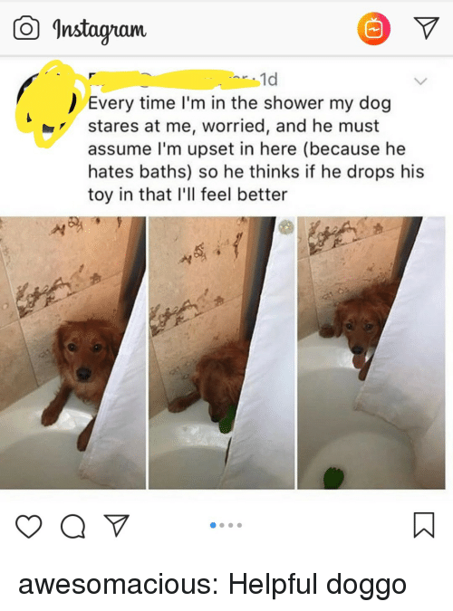 "Shower, Tumblr, and Blog: Instagam  1d  Every time I'm in the shower my dog  stares at me, worried, and he must  assume l'm upset in here (because he  hates baths) so he thinks if he drops his  toy in that I'll feel better  yaV"" awesomacious:  Helpful doggo"