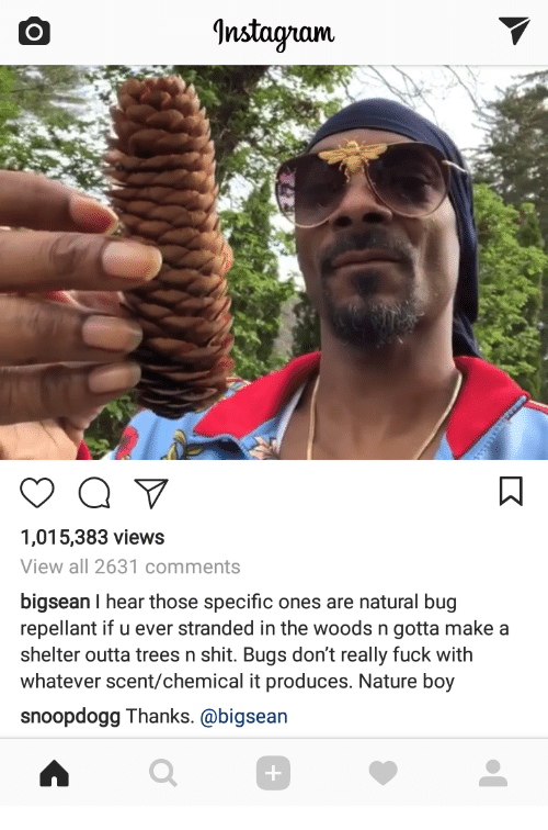 Instagram, Shit, and Fuck: Instagram  1,015,383 views  View all 2631 comments  bigsean I hear those specific ones are natural bug  repellant if u ever stranded in the woods n gotta makea  shelter outta trees n shit. Bugs don't really fuck with  whatever scent/chemical it produces. Nature boy  snoopdogg Thanks. @bigsean  0