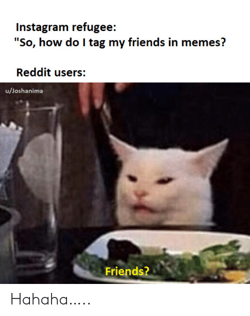 "refugee: Instagram refugee:  ""So, how do I tag my friends in memes?  Reddit users:  u/Joshanima  Friends? Hahaha….."