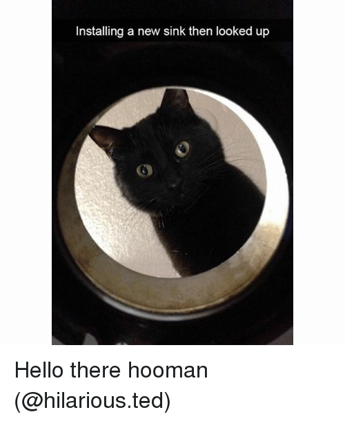Hoomans: Installing a new sink then looked up Hello there hooman (@hilarious.ted)