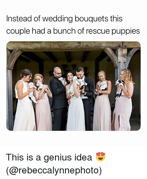 Funny, Puppies, and Genius: Instead of wedding bouquets this  couple had a bunch of rescue puppies This is a genius idea 😍 (@rebeccalynnephoto)