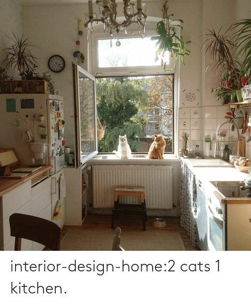 Design: interior-design-home:2 cats 1 kitchen.