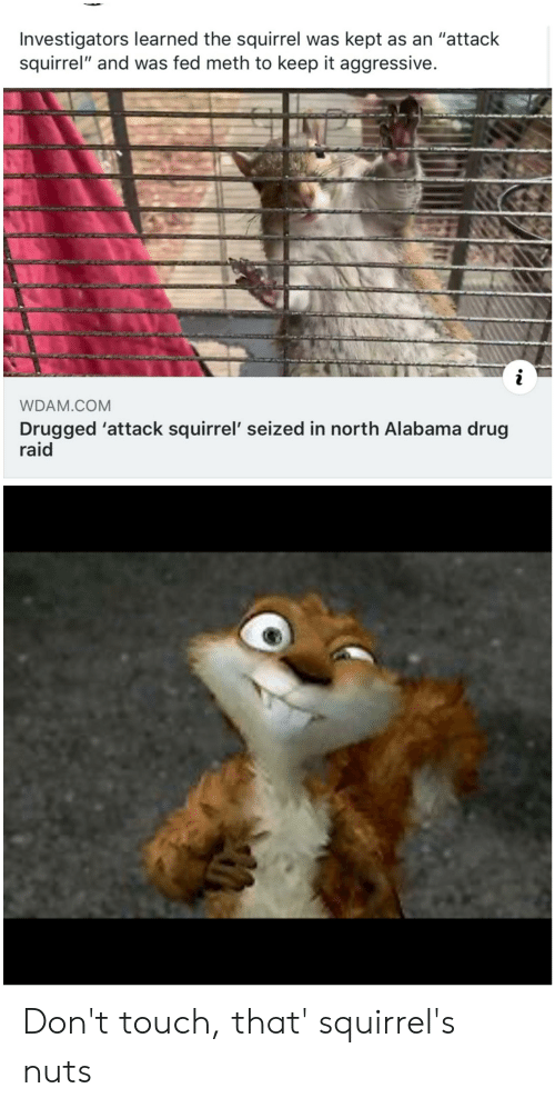"""Reddit, Alabama, and Squirrel: Investigators learned the squirrel was kept as an """"attack  squirrel"""" and was fed meth to keep it aggressive.  WDAM.COM  Drugged 'attack squirrel' seized in north Alabama drug  raid Don't touch, that' squirrel's nuts"""