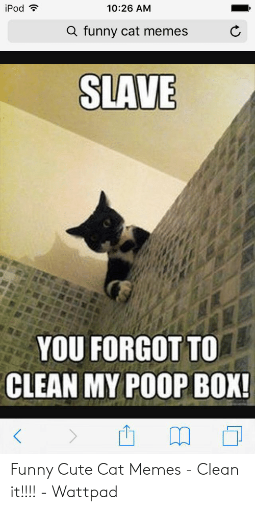 Ipod 1026 Am A Funny Cat Memes Slave You Forgot To Clean My
