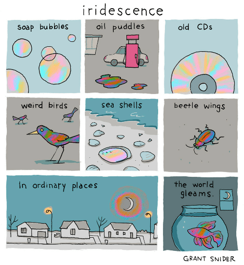Sea Shells: iridescence  oil puddles  old CDs  Soap bubbles  beetle wings  weird birds  sea shells  the world  gleams.  In ordinary places  GRANT SNIDER
