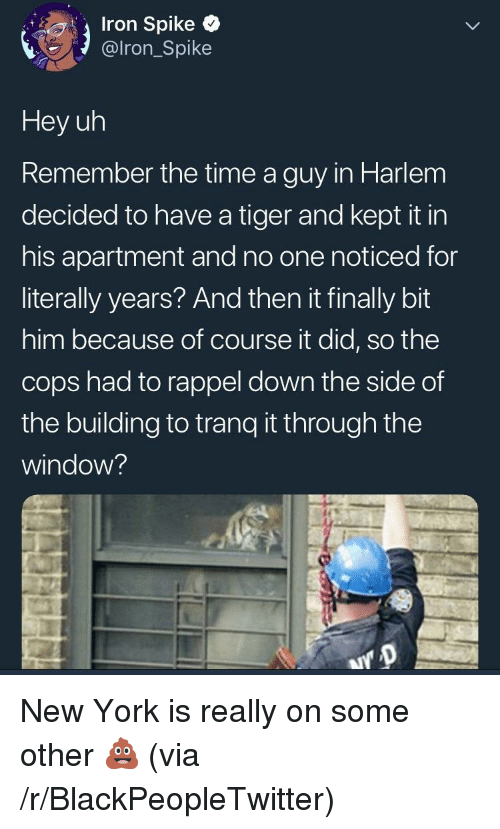 Blackpeopletwitter, New York, and Tiger: Iron Spike  @lron_Spike  Hey uh  Remember the time a guy in Harlem  decided to have a tiger and kept it in  his apartment and no one noticed for  literally years? And then it finally bit  him because of course it did, so the  cops had to rappel down the side of  the building to tranq t through the  window? New York is really on some other 💩 (via /r/BlackPeopleTwitter)