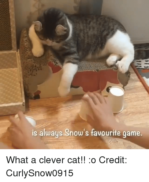 Memes, 🤖, and Clever: is always Snow's favourite game What a clever cat!! :o  Credit: CurlySnow0915