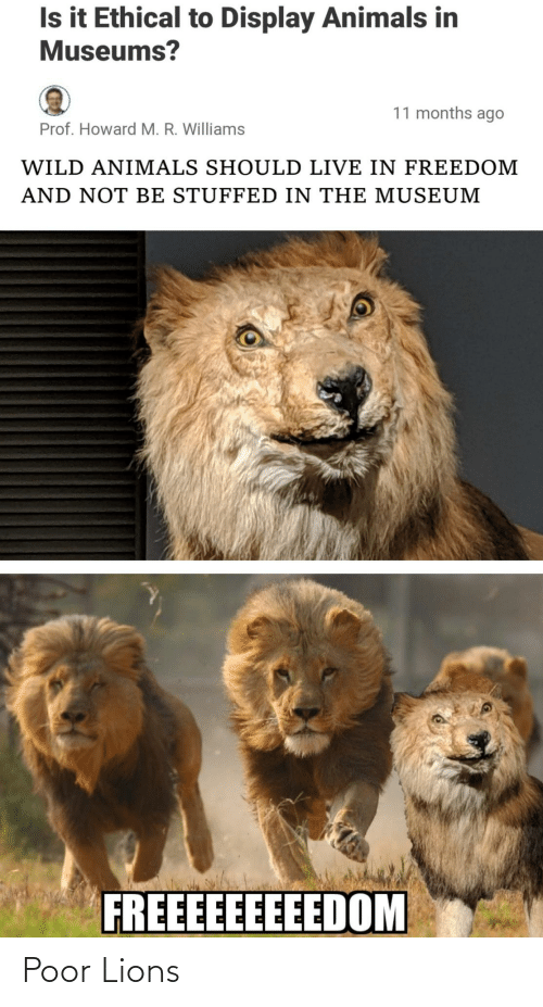 Animals, Lions, and Live: Is it Ethical to Display Animals in  Museums?  11 months ago  Prof. Howard M. R. Williams  WILD ANIMALS SHOULD LIVE IN FREEDOM  AND NOT BE STUFFED IN THE MUSEUM  FREEEEEEEEEDOM Poor Lions