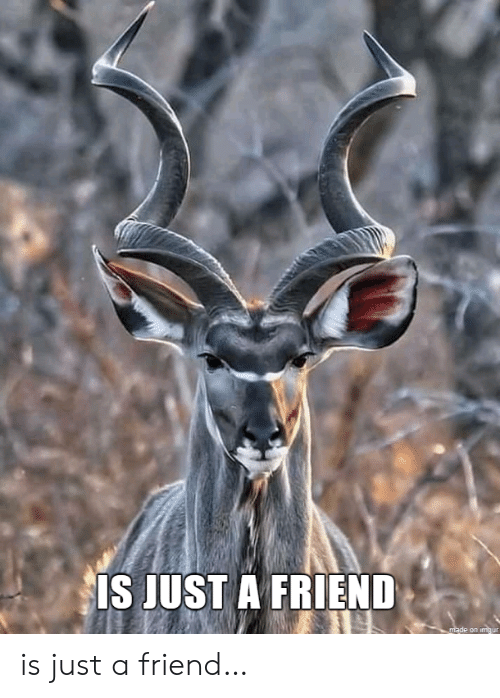 Imgur, Friend, and Made: IS JUST A FRIEND  made on imgur is just a friend…