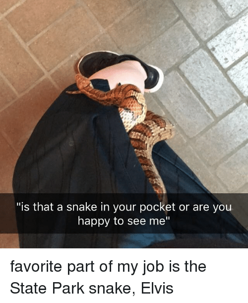 """Memes, Happy, and Snake: """"is that a snake in your pocket or are you  happy to see me"""" favorite part of my job is the State Park snake, Elvis"""