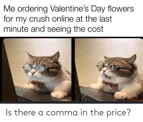 price: Is there a comma in the price?