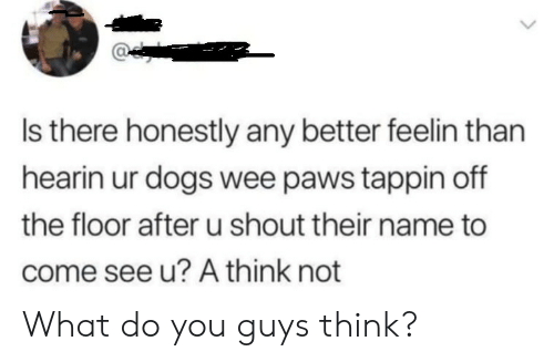 Dogs, Wee, and Name: Is there honestly any better feelin than  hearin ur dogs wee paws tappin off  the floor after u shout their name to  come see u? A think not What do you guys think?