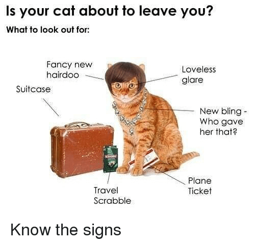 bling: Is your cat about to leave you?  What to look out for:  Fancy new  hairdoo  Loveless  glare  Suitcase  New bling-  Who gave  her that  Plane  Ticket  Travel  Scrabble Know the signs