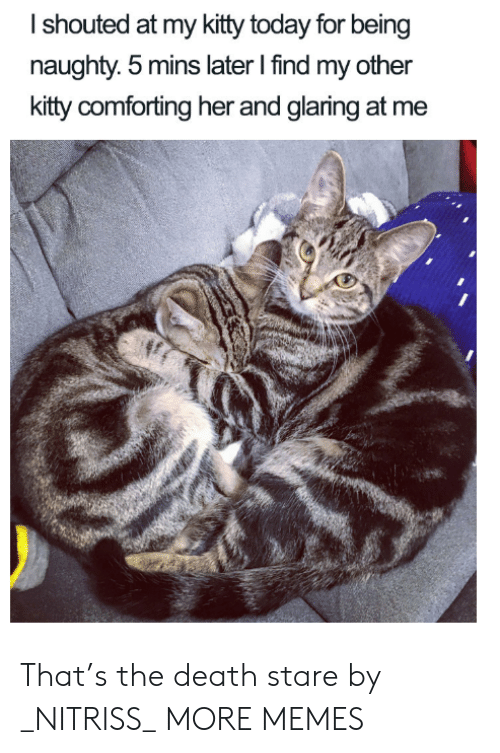 Dank, Memes, and Target: Ishouted at my kitty today for being  naughty. 5 mins later I find my other  kitty comforting her and glaring at me That's the death stare by _NITRISS_ MORE MEMES