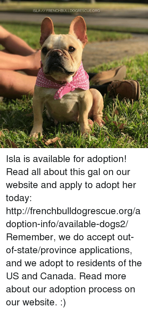 Memes, 🤖, and Org: ISLA FRENCHBULLDOGRESCUE.ORG Isla is available for adoption! Read all about this gal on our website <location, likes, dislikes> and apply to adopt her today: http://frenchbulldogrescue.org/adoption-info/available-dogs2/  Remember, we do accept out-of-state/province applications, and we adopt to residents of the US and Canada. Read more about our adoption process on our website. :)