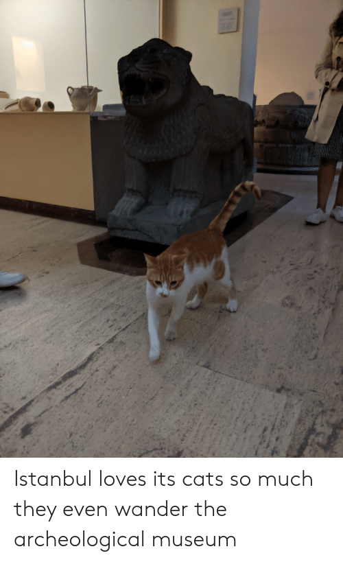 Cats, Istanbul, and They: Istanbul loves its cats so much they even wander the archeological museum