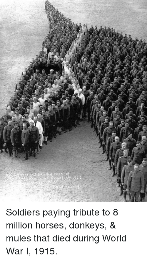 donkeys: isted /Men . o  Depot (No 326 Soldiers paying tribute to 8 million horses, donkeys, & mules that died during World War I, 1915.