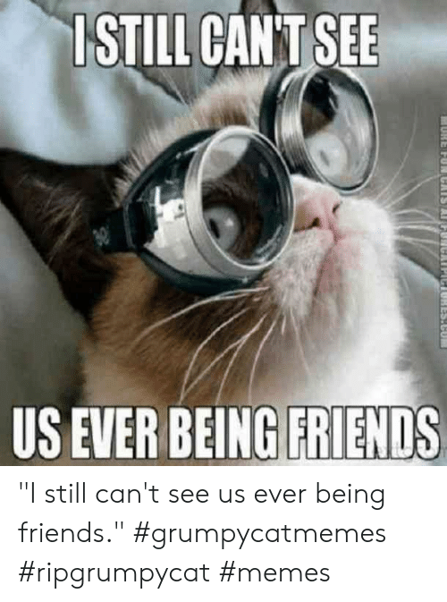 """Friends, Memes, and Still: ISTILL CANT SEE  US EVER BEING FRIENDS  1ES.CU """"I still can't see us ever being friends."""" #grumpycatmemes #ripgrumpycat #memes"""