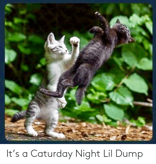 Caturday: It's a Caturday Night Lil Dump