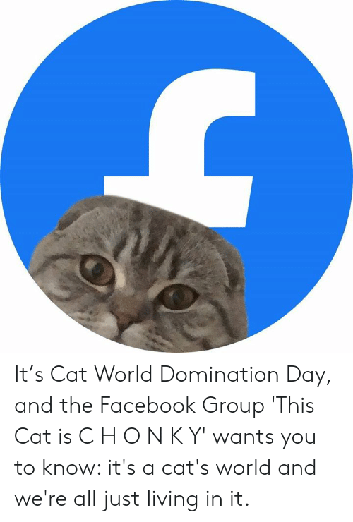 Cats, Dank, and Facebook: It's Cat World Domination Day, and the Facebook Group 'This Cat is C H O N K Y' wants you to know: it's a cat's world and we're all just living in it.