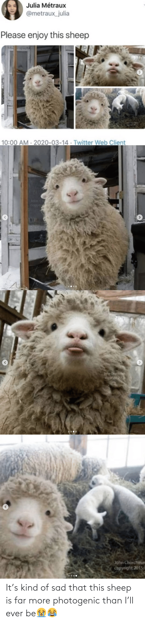 Sad: It's kind of sad that this sheep is far more photogenic than I'll ever be😭😂