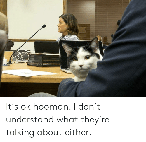Hooman: It's ok hooman. I don't understand what they're talking about either.