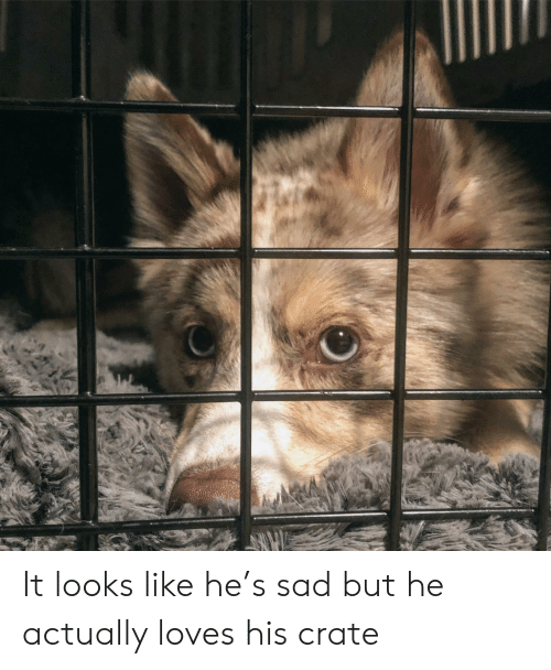 Sad, Like, and Loves: It looks like he's sad but he actually loves his crate