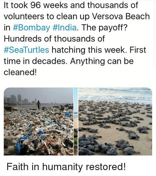Memes, Beach, and India: It took 96 weeks and thousands of  volunteers to clean up Versova Beach  in #Bombay #India. The payoff?  Hundreds of thousands of  #SeaTurtles hatching this week. First  time in decades. Anything can be  cleaned! Faith in humanity restored!