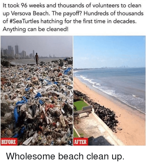 Beach, Time, and Wholesome: It took 96 weeks and thousands of volunteers to clean  up Versova Beach. The payoff? Hundreds of thousands  of #SeaTurtles hatching for the first time in decades.  Anything can be cleaned!  BEFORE  AFTER Wholesome beach clean up.