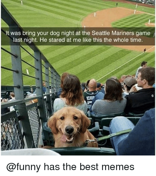 Funny, Memes, and Best: It was bring your dog night at the Seattle Mariners game  last night. He stared at me like this the whole time.  CHIP @funny has the best memes