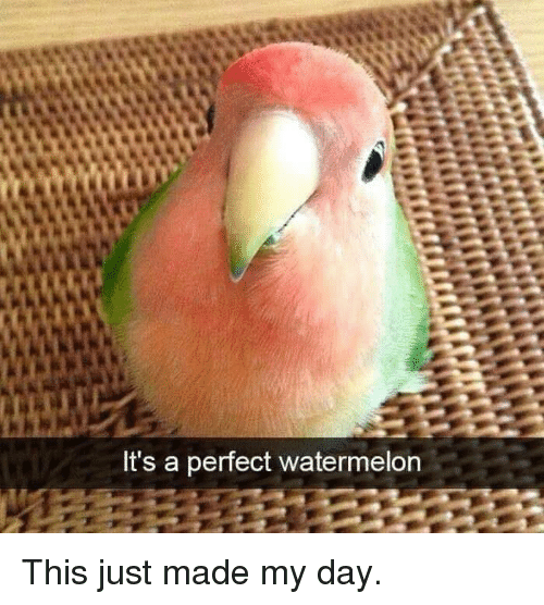 Watermelon, Day, and Made: It's a perfect watermelon This just made my day.