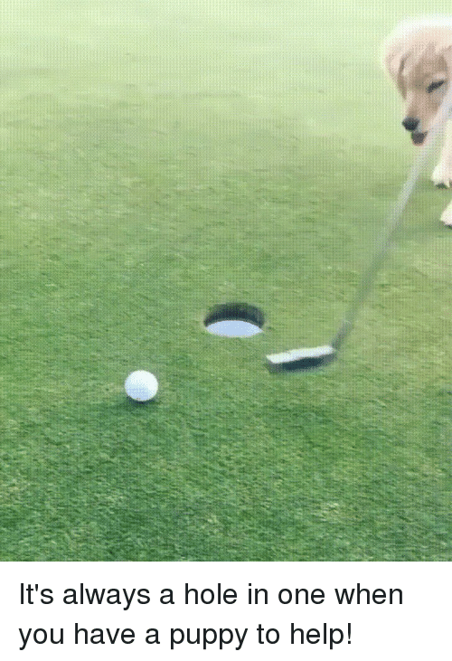 Help, Puppy, and One: It's always a hole in one when you have a puppy to help!