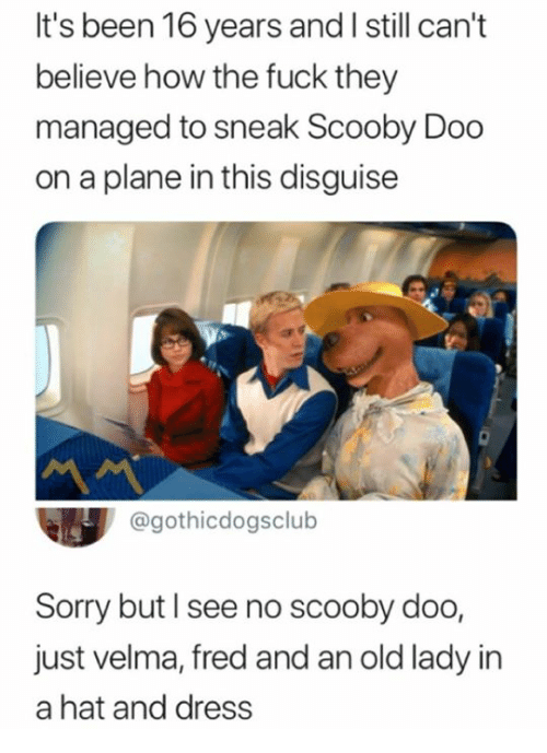 Funny, Scooby Doo, and Sorry: It's been 16 years and I still can't  believe how the fuck they  managed to sneak Scooby Dodo  on a plane in this disguise  @gothicdogsclub  Sorry but I see no scooby doo,  just velma, fred and an old lady in  a hat and dress