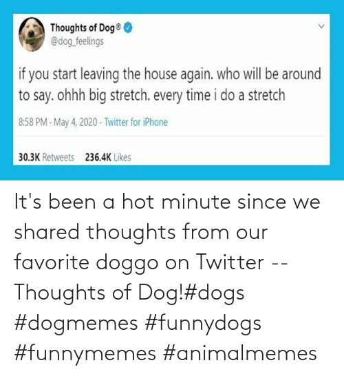 Favorite: It's been a hot minute since we shared thoughts from our favorite doggo on Twitter -- Thoughts of Dog!#dogs #dogmemes #funnydogs #funnymemes #animalmemes